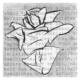 """Istituto di Istruzione """"La Rosa Bianca"""""""